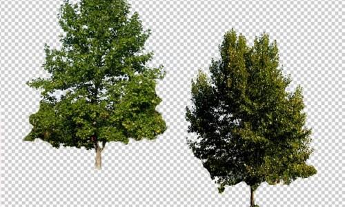 прозрачный клипарт с деревьями
