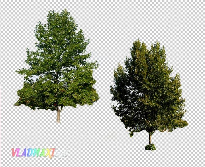 Деревья в формате PSD клипарты